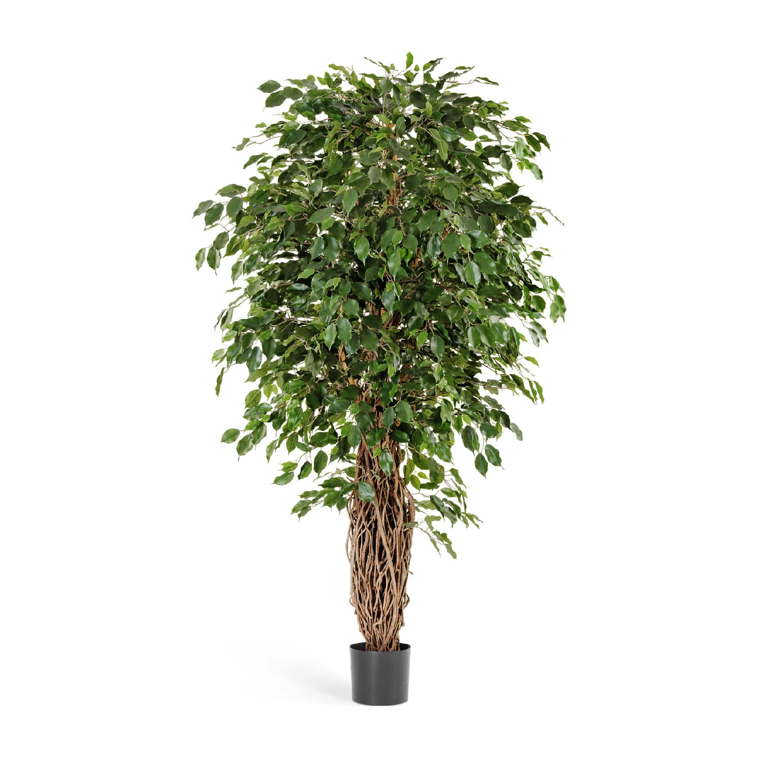 Купить Фикус Бенджамина Лиана Де Люкс 210 см, COSMO RED, Зеленый, Пластик
