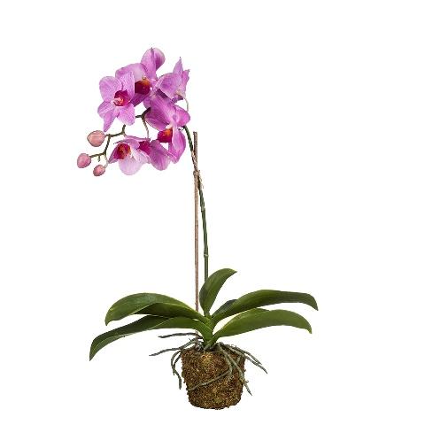 Орхидея (104528)Разное<br>SILK-KA - это известная Голландская компания, которая занимается производством искусственных цветов, фруктов и декоративных растений из шелка. Компания была создана благодаря безудержной страсти Patrick Oude Groeniger (директор и создатель SILK-KA) к цветам и фруктам. <br><br>Особое внимание создатель обратил на подлинное качество и безупречность искусственных цветов и фруктов. Всё создавалось с такой целью, чтобы трудно было отличить настоящее от искусственного. <br><br>Мастера компании активно работают...<br><br>stock: 5<br>Материал: Обработанная ткань, пластик<br>Цвет: Mixed<br>Длина: 49