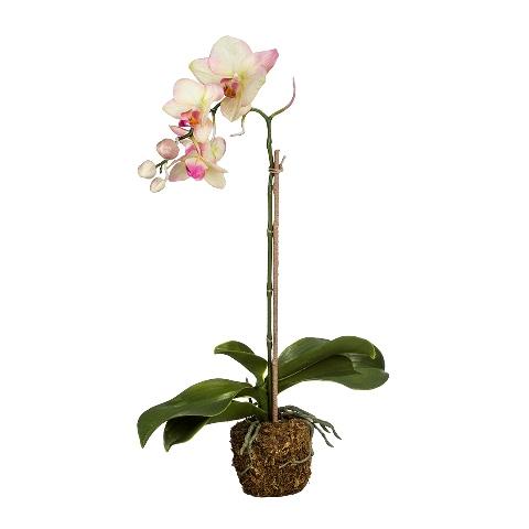 Орхидея (104530)Разное<br>SILK-KA - это известная Голландская компания, которая занимается производством искусственных цветов, фруктов и декоративных растений из шелка. Компания была создана благодаря безудержной страсти Patrick Oude Groeniger (директор и создатель SILK-KA) к цветам и фруктам. <br><br>Особое внимание создатель обратил на подлинное качество и безупречность искусственных цветов и фруктов. Всё создавалось с такой целью, чтобы трудно было отличить настоящее от искусственного. <br><br>Мастера компании активно работают...<br><br>stock: 5<br>Материал: Обработанная ткань, пластик<br>Цвет: Mixed<br>Длина: 49