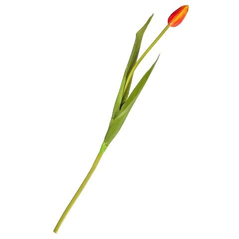 Тюльпан (90820)Разное<br>SILK-KA - это известная Голландская компания, которая занимается производством искусственных цветов, фруктов и декоративных растений из шелка. Компания была создана благодаря безудержной страсти Patrick Oude Groeniger (директор и создатель SILK-KA) к цветам и фруктам. <br><br>Особое внимание создатель обратил на подлинное качество и безупречность искусственных цветов и фруктов. Всё создавалось с такой целью, чтобы трудно было отличить настоящее от искусственного. <br><br>Мастера компании активно работают...<br><br>stock: 1<br>Материал: Обработанная ткань, пластик<br>Цвет: Red<br>Длина: 50