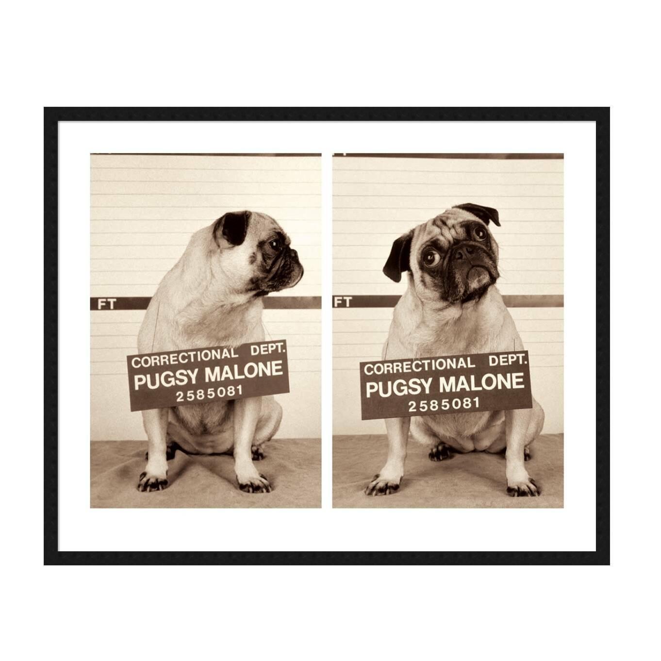 Постер Pugsy Malone