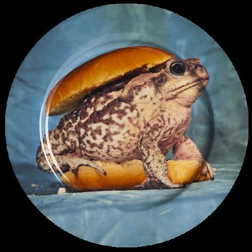 Тарелка ToadПосуда<br>Тарелка Toad из коллекции Toiletpaper от компании Seletti — это как раз то, что и следовало ожидать от этой дизайн-студии. Знаменитые на весь мир Seletti не раз прогремели своими коллекциями посуды и мебели провокационного содержания. Но за это их все и любят. <br> <br> Кухонная утварьToiletpaper названа в честь одноименного журнала, основанного в 2010 году художником Маурицио Кателланом и фотографом Пьерпауло<br> Феррари. За время существования издания огромное количество изображений<br> из жу...<br>
