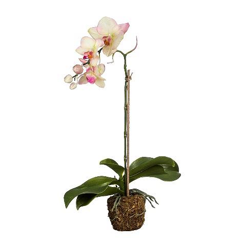 Орхидея (104530)Разное<br>SILK-KA - это известная Голландская компания, которая занимается производством искусственных цветов, фруктов и декоративных растений из шелка. Компания была создана благодаря безудержной страсти Patrick Oude Groeniger (директор и создатель SILK-KA) к цветам и фруктам. <br><br>Особое внимание создатель обратил на подлинное качество и безупречность искусственных цветов и фруктов. Всё создавалось с такой целью, чтобы трудно было отличить настоящее от искусственного. <br><br>Мастера компании активно работают...<br><br>stock: 4<br>Материал: Обработанная ткань, пластик<br>Цвет: Mixed<br>Длина: 49