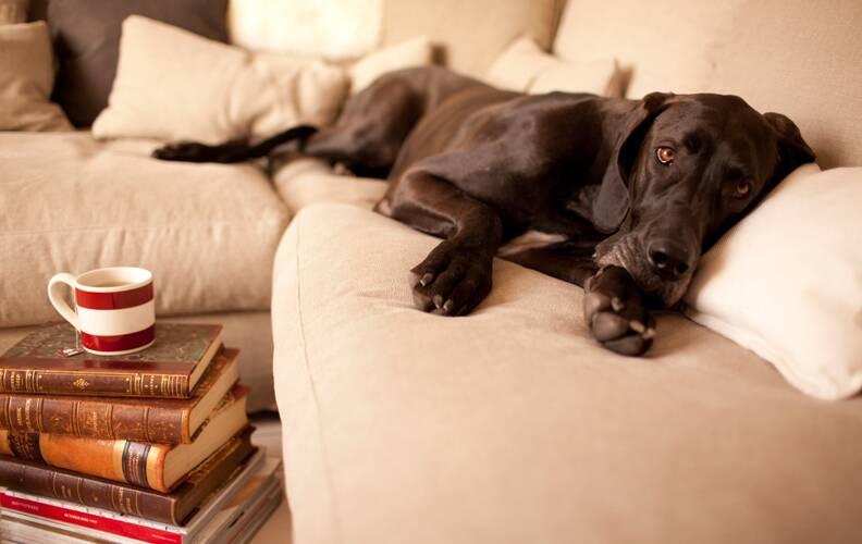 Sits: европейское качество комфортной жизни.