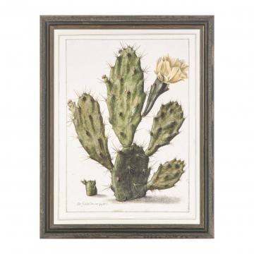 Постер Opuntia Cactus