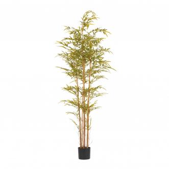 Бамбук высота 190 см