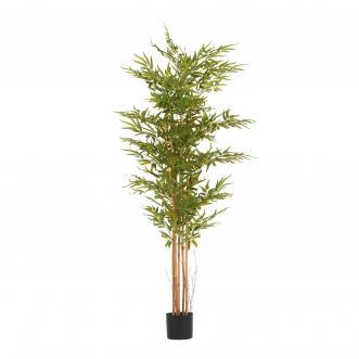 Бамбук высота 175 см