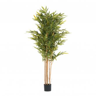 Бамбук высота 180 см