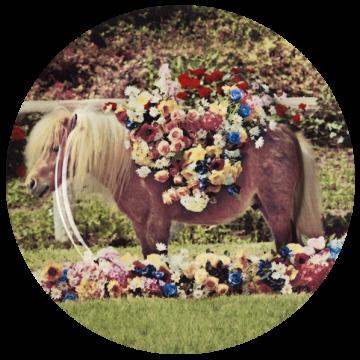 Тарелка Pony