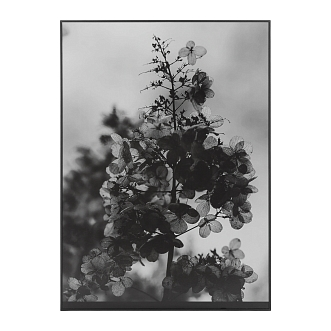 Картина Big Calantha 70x50